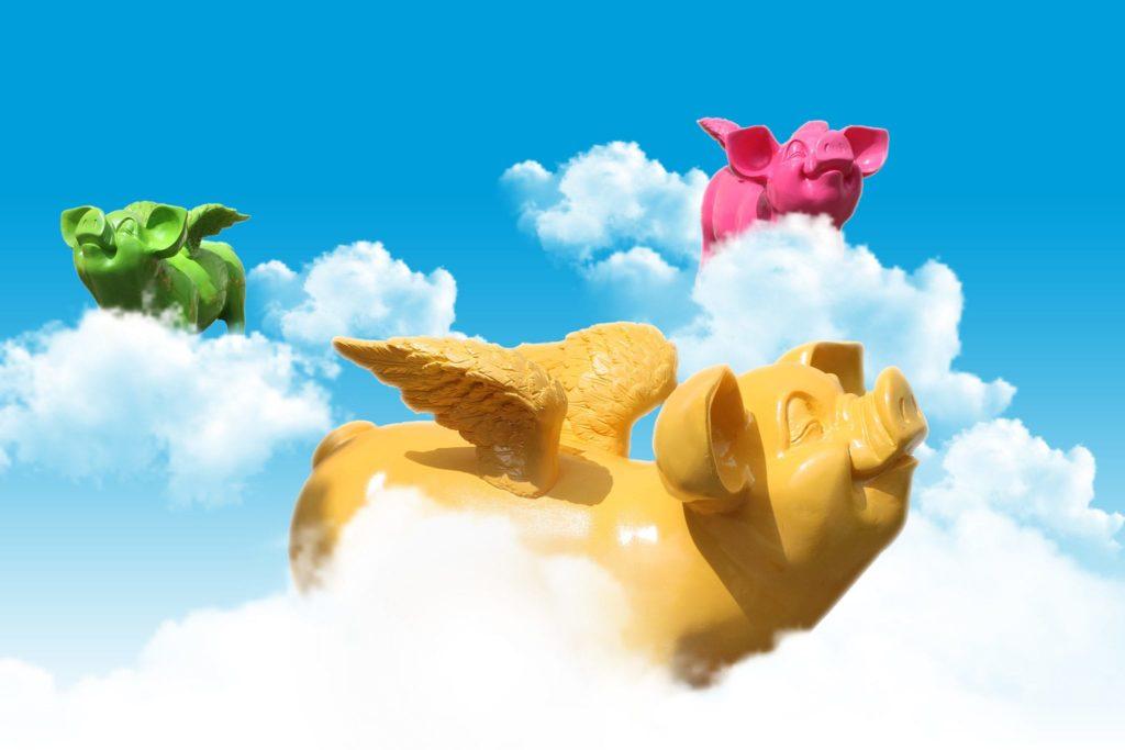 vliegende varkens stoobz design