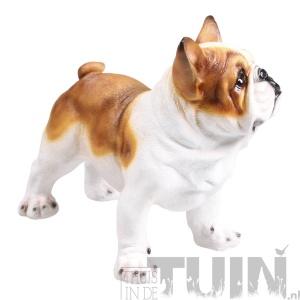 franse bulldog bruin tuindecoratie