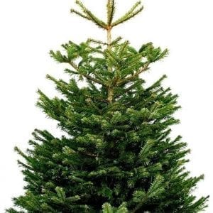 nordmann kerstboom 150-180cm thuisindetuin.nl_04