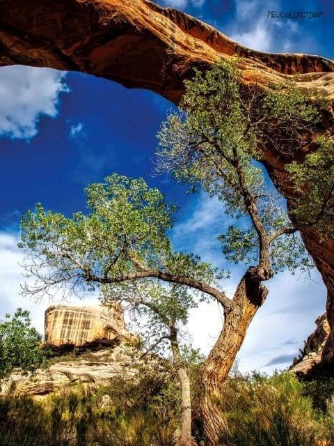 1800112165-buitenschilderij-raw-tree-pb-collection-70x130