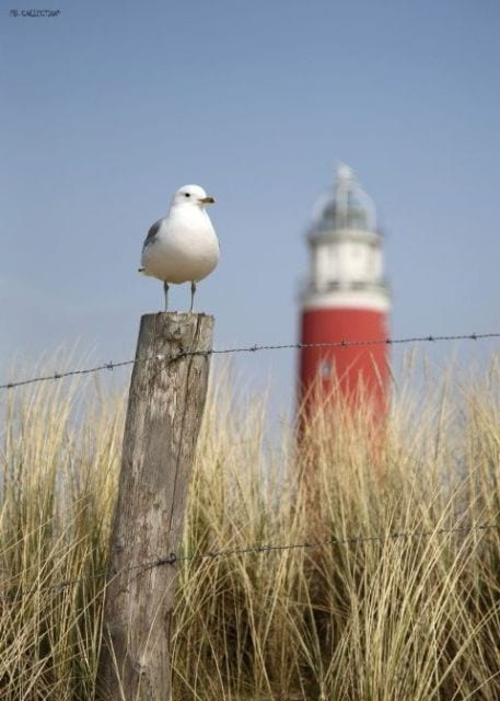 1800130166-buitenschilderij-maritime-seagull-pb-collection-70x130