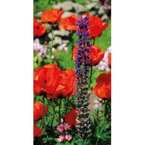 1900235167-buitenschilderij-bloemen-pb-collection-70x130