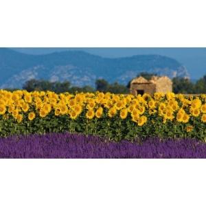 1900238167-buitenschilderij-zonnebloemen-pb-collection-70x130
