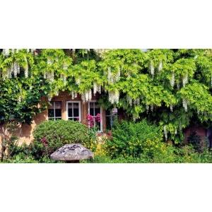 1900245167-buitenschilderij-wisteria-gevel-pb-collection-70x130