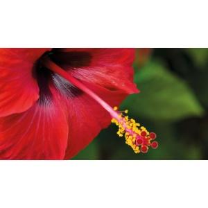 1900258167-buitenschilderij-hibiscus-pb-collection-70x130