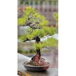 1900272167-buitenschilderij-bonsai-pb-collection-70x130