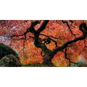 1900279167-buitenschilderij-rode-esdoorn-pb-collection-70x130