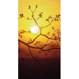 1900281167-buitenschilderij-zonsondergang-pb-collection-70x130
