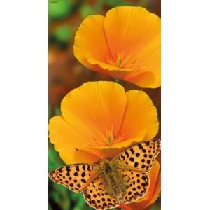 1900290167-buitenschilderij-oranje-vlinder-pb-collection-70x130