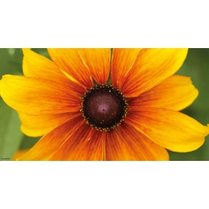 1900292167-buitenschilderij-gele-bloem-pb-collection-70x130