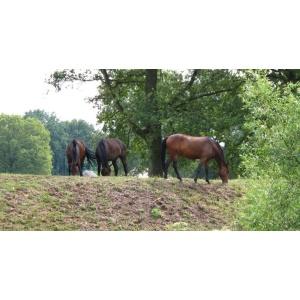 1900300167-buitenschilderij-paarden-bij-boom-pb-collection-70x130