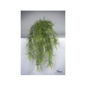 06484p-asparagus-hangplant-in-pot