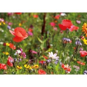 1800151166-buitenschilderij-potpourri-flowers-pb-collection-70x130