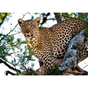 1800158166-buitenschilderij-africa-wild-cheetah-pb-collection-70x130
