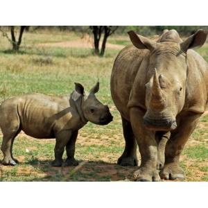 1800165165-buitenschilderij-africa-wild-rhino-pb-collection-70x130