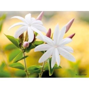 1800168165-buitenschilderij-wild-flower-close-up-pb-collection-70x130