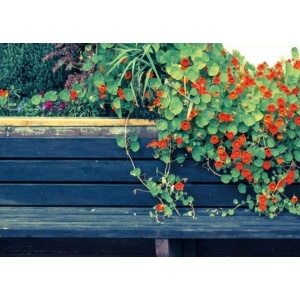 1800180166-buitenschilderij-nasturtium-bench-pb-collection-70x130