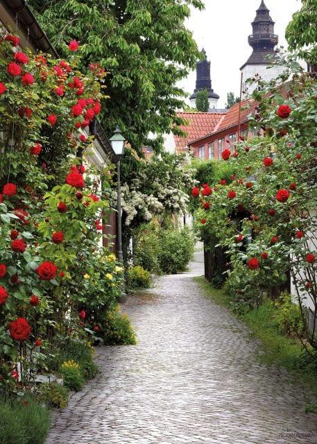 1800392166-buitenschilderij-alley-roses-collection-70x130