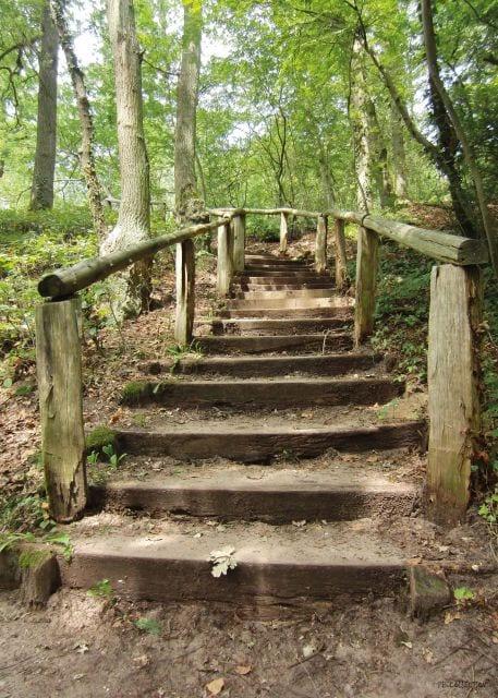 1800393166-buitenschilderij-forest-stairs-collection-70x130