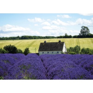 1800424166-buitenschilderij-france-lavender-collection70x130