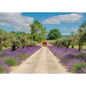 1800431166-buitenschilderij-lavender-view-with-door-collection70x130