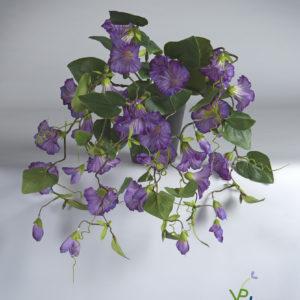 Eeuwig bloeiende Petunia